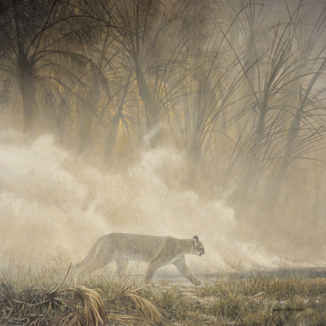 Robert Bateman Smoke Screen Cougar
