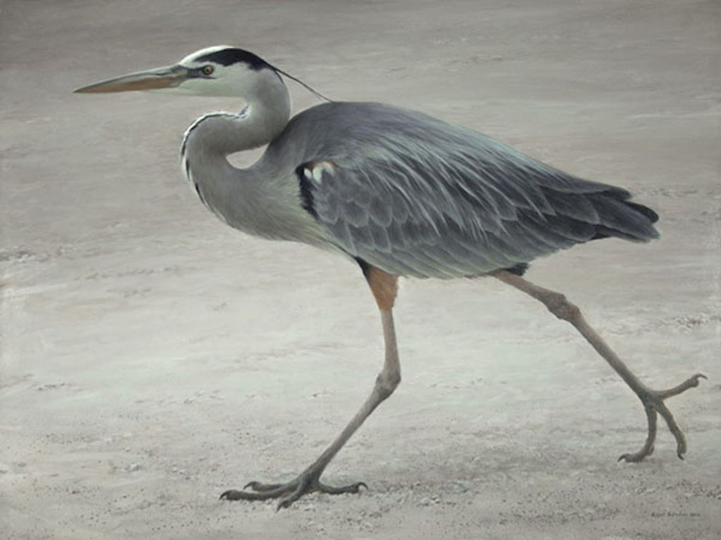 Robert Bateman Full Stride Blue Heron