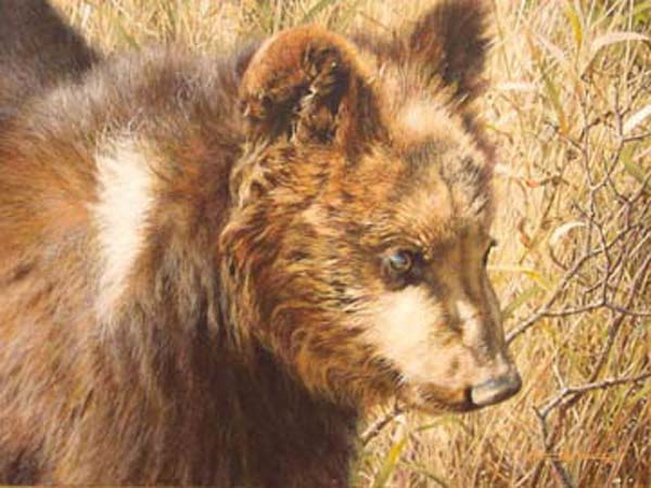 Carl Brenders grizzly Cub