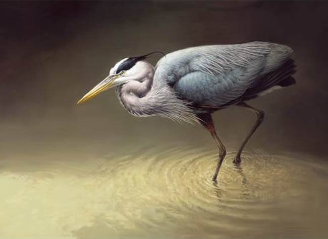 Michael Dumas Great Blue Heron