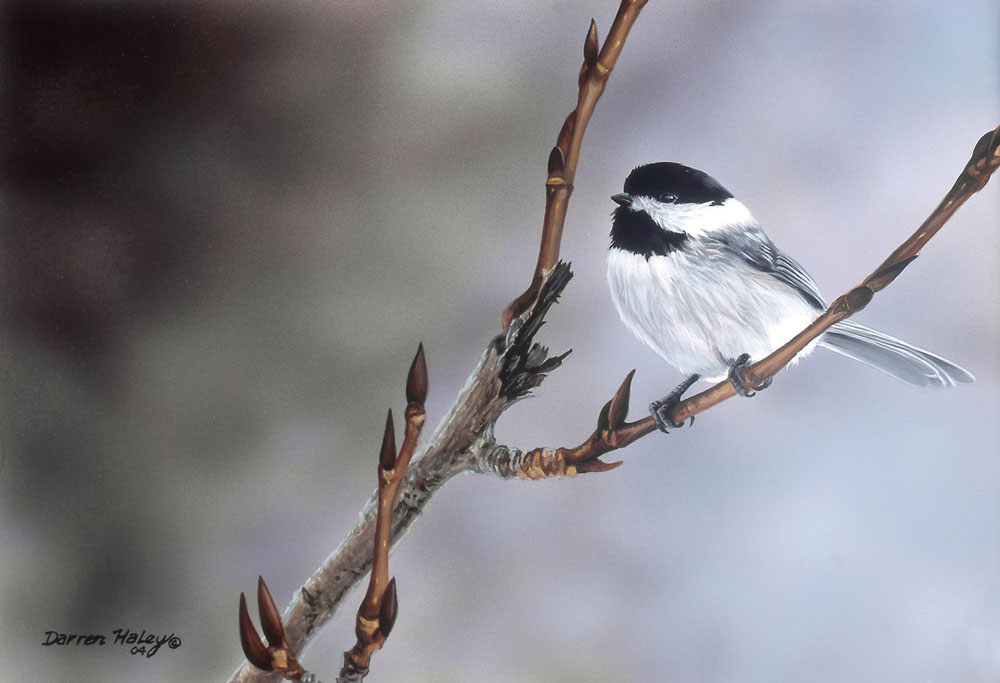 Darren haley Winter Chickadee Two