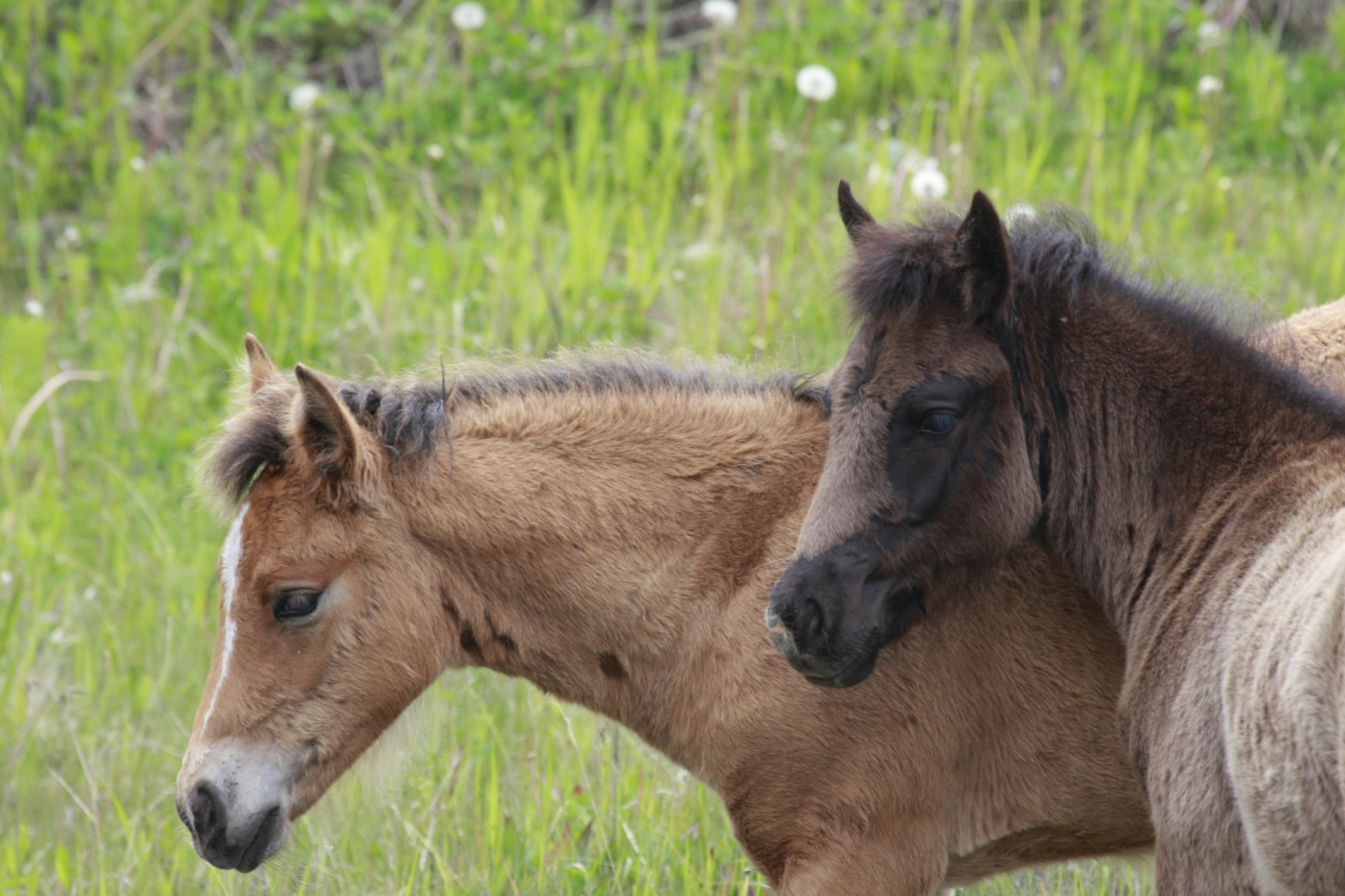 Angelo Avlonitis Wild Horses Young Albertans