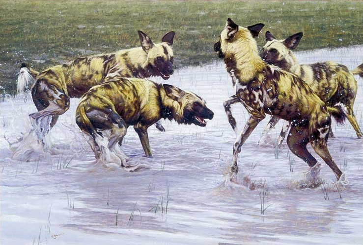 John Banovich After The Rains Wild Dogs