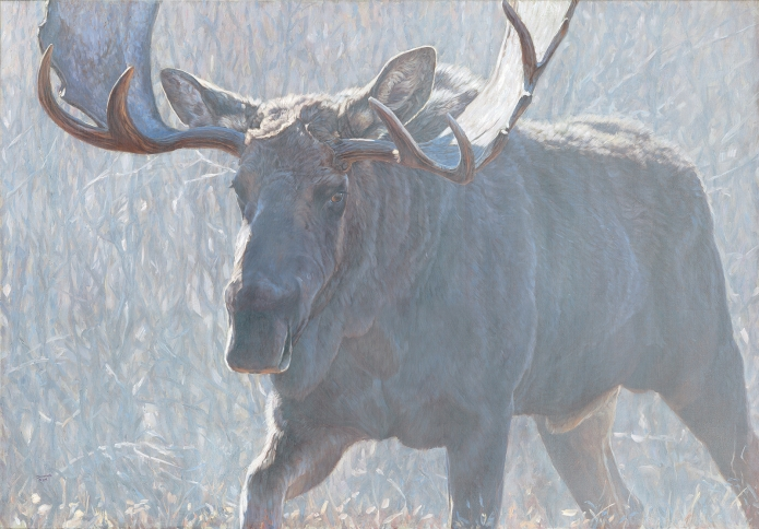 John Banovich Bull of the Woods