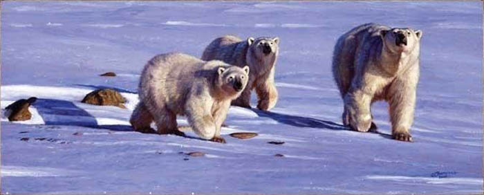 John Banovich Caution In The Wind Polar Bears