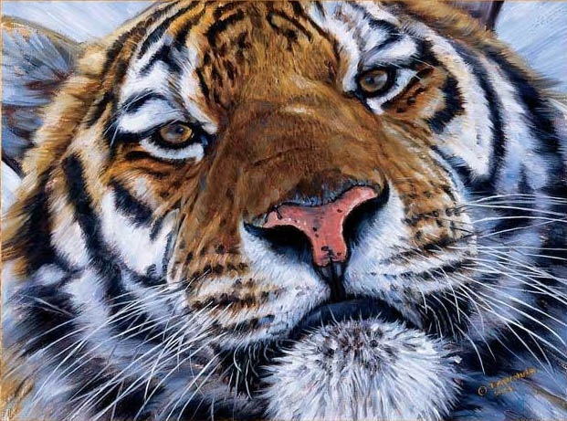 John Banovich Face To Face Tiger