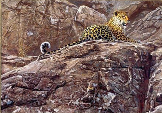 John Banovich First Light Leopard