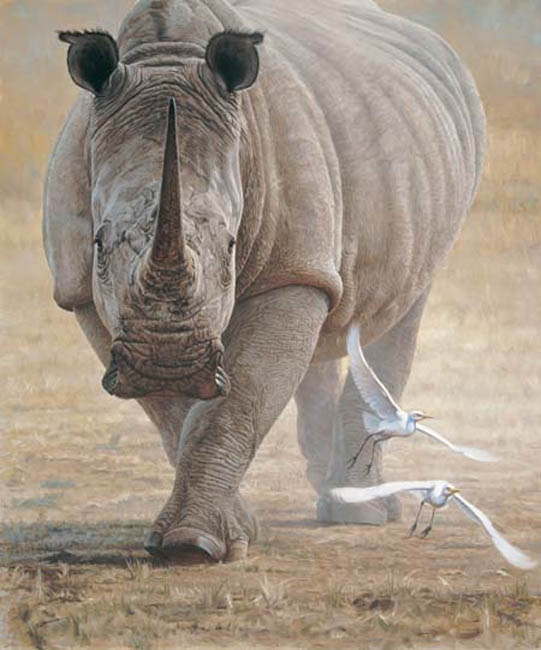 John Banovich Great White Rhinoceras
