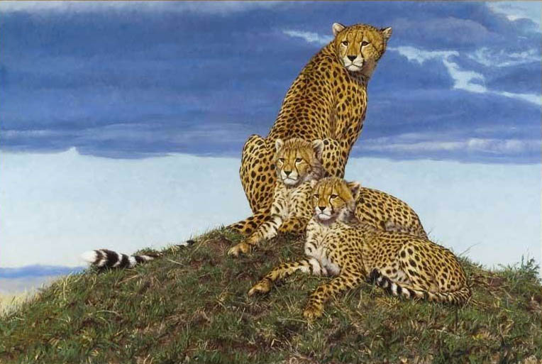 John Banovich Storm Watchers Cheetah
