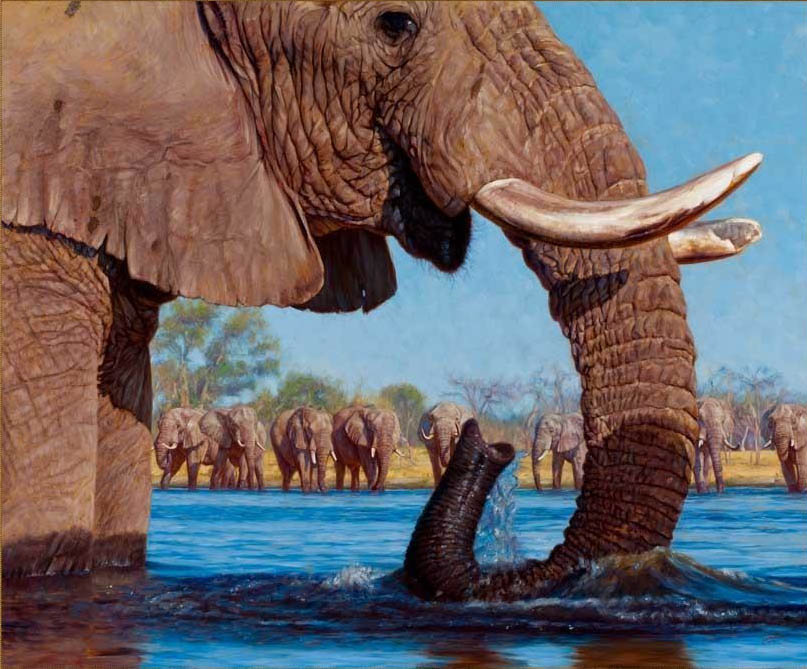 John Banovich Swimming With Elephants