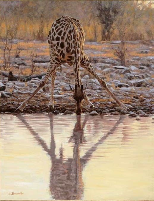 John Banovich The Long Drink Giraffe