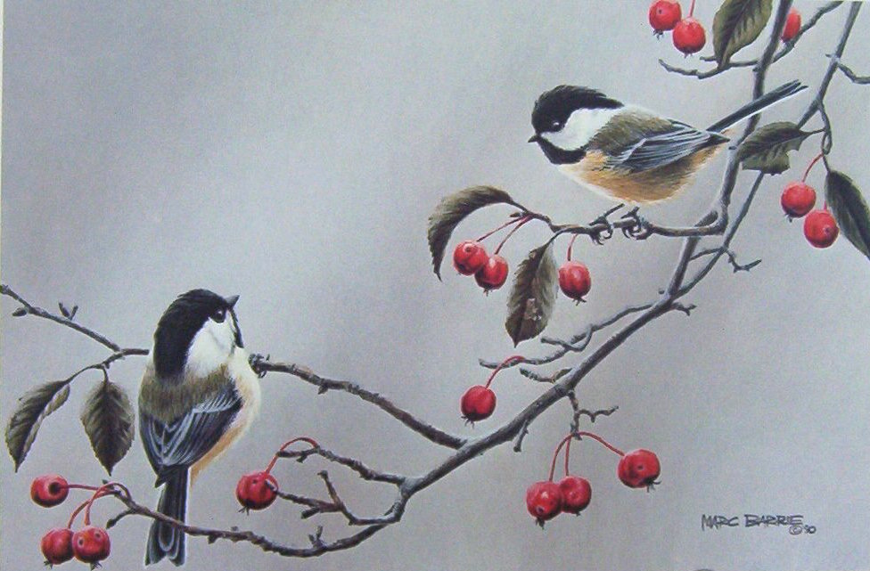 Marc Barrie Chickadees