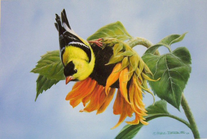 Marc Barrie Free Lunch Goldfinch