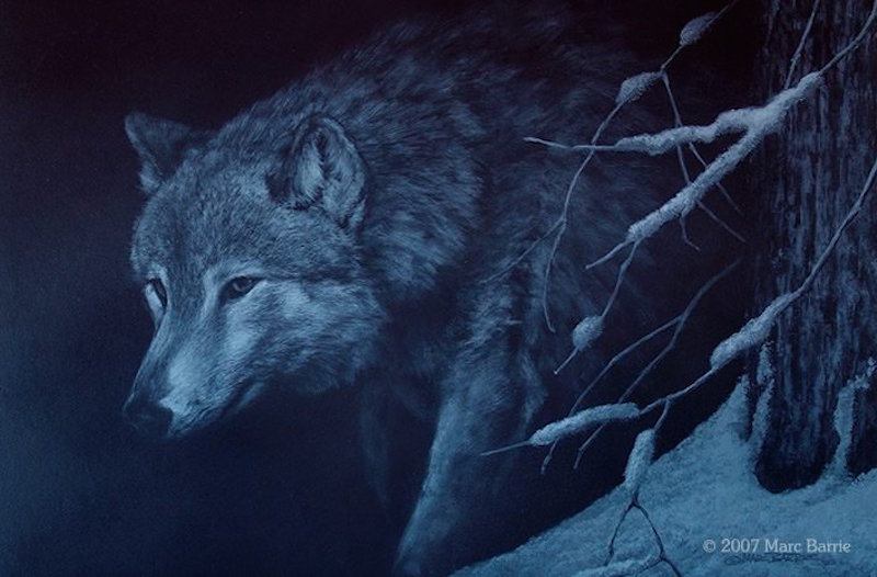 Marc Barrie Hunting Shadows Wolf