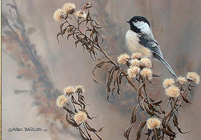 Marc Barrie Chickadee and Wild Asters