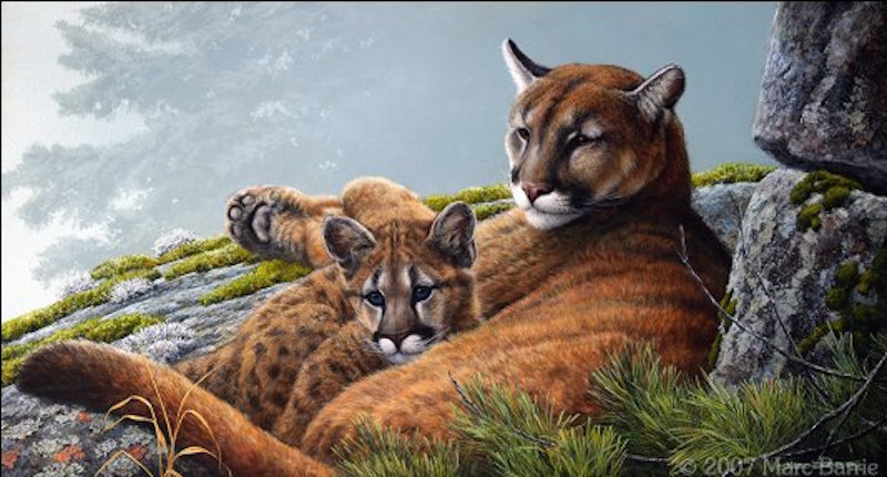 Marc Barrie Cougar and Kit