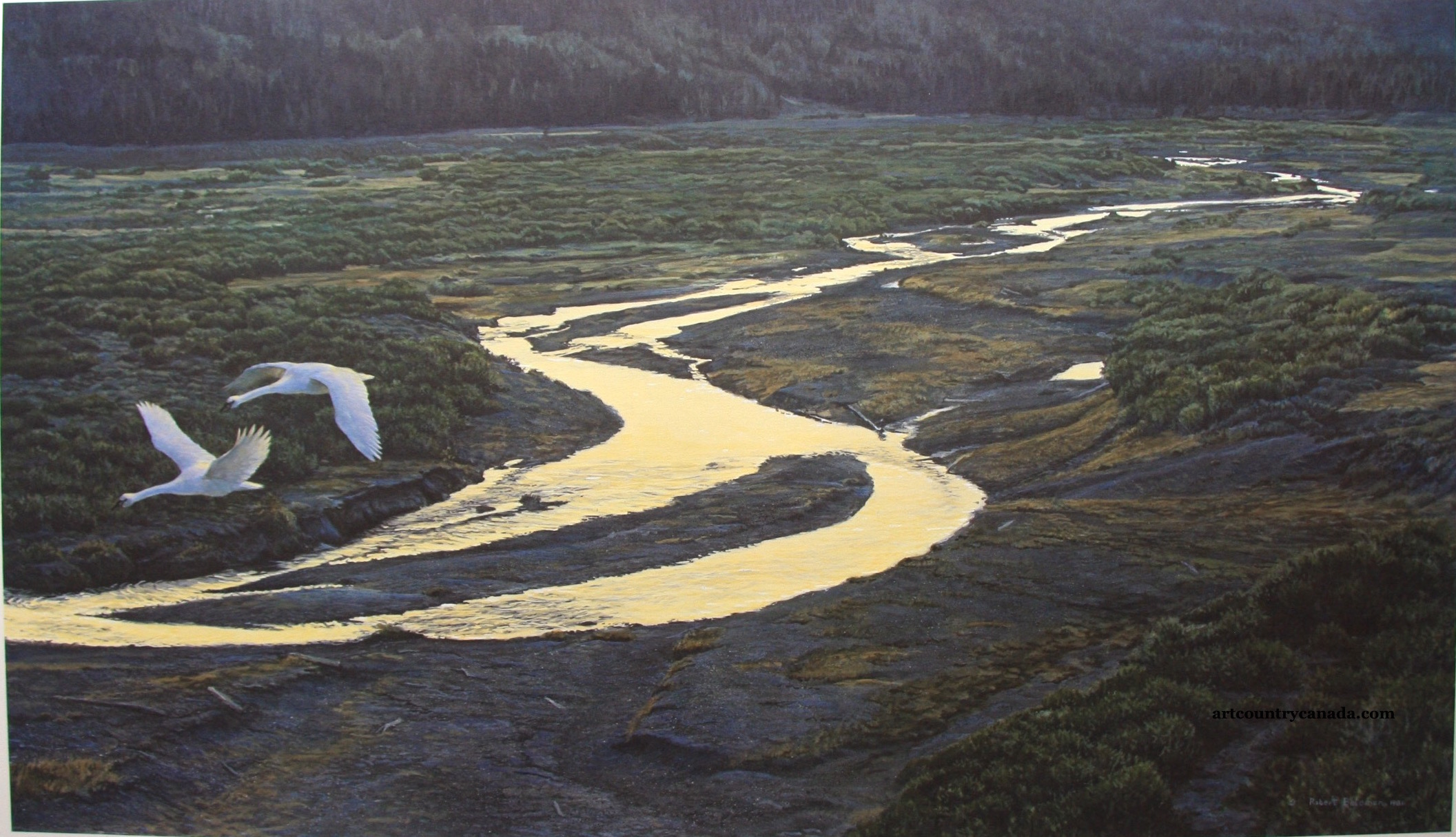 Robert Bateman Above The River Trumpeter Swans