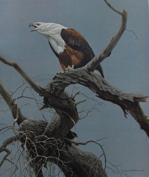 Robert Bateman African Fish Eagle