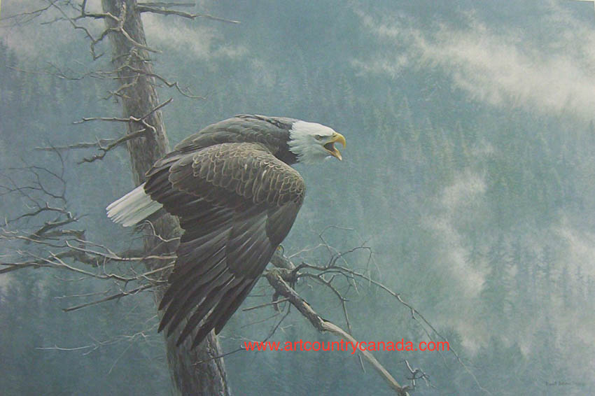 Robert Bateman The Air The Forest And The Watch Bald Eagle
