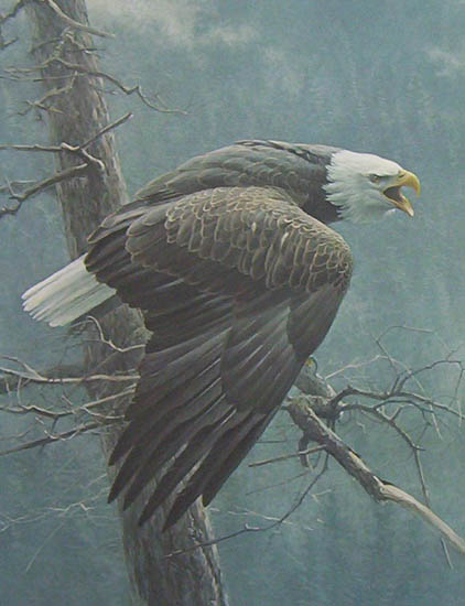 Robert Bateman The Air The Forest and the Watch
