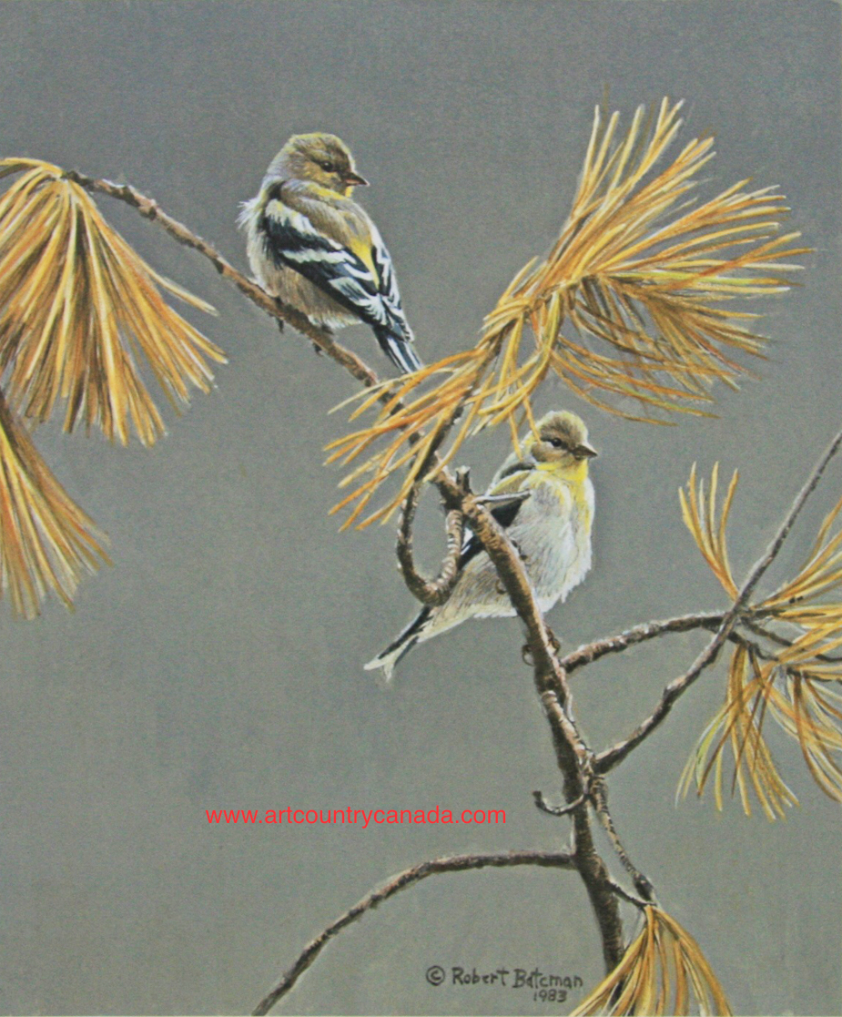 Robert Bateman American Dress Winter Goldfinch