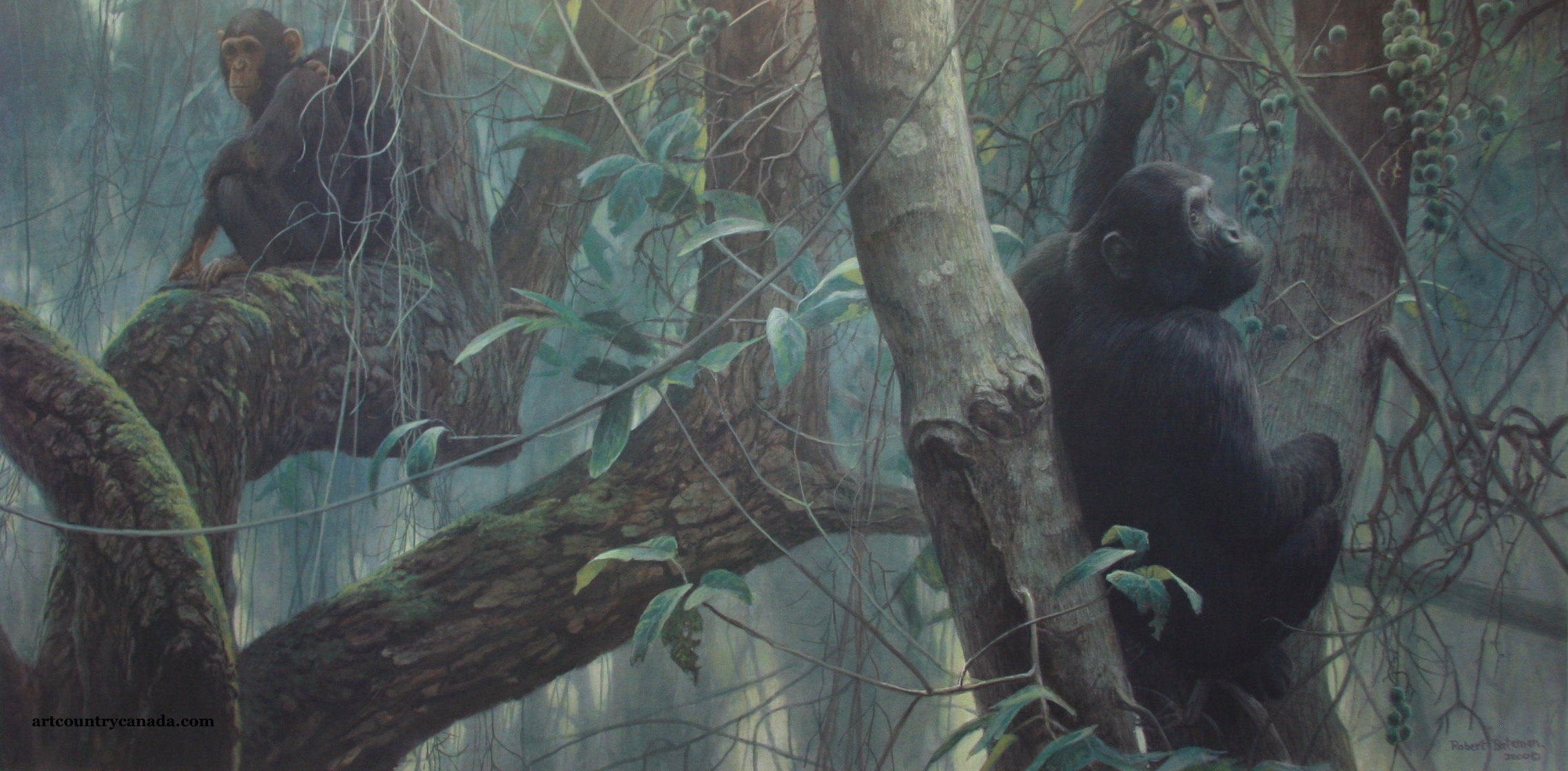 Robert Bateman At Mahale chimpanzees