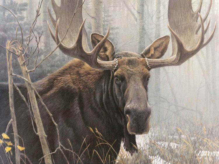 how to sell a robert bateman print