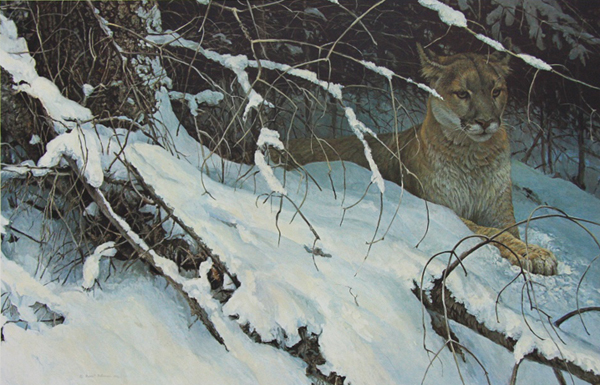 Robert Bateman Cougar In The Snow