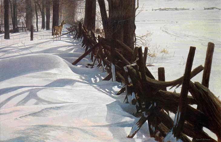 Robert Bateman Edge Of The Woods White-Tailed Deer