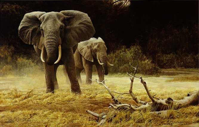 Robert Bateman Elephant Cow and Calf