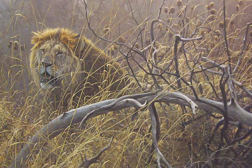Robert Bateman Encounter In The Bush Lions