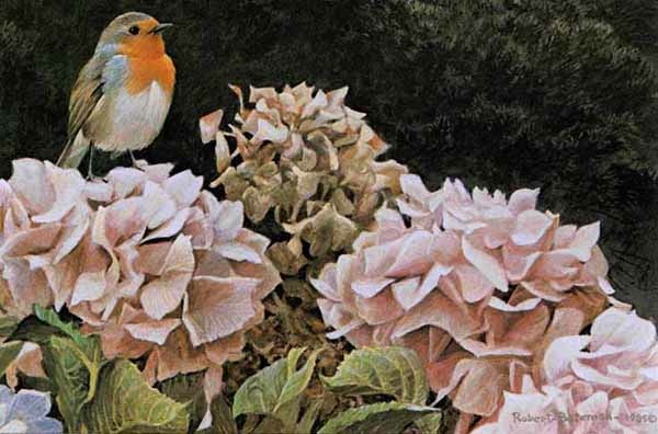 Robert Bateman European Robin and Hydrangeasr
