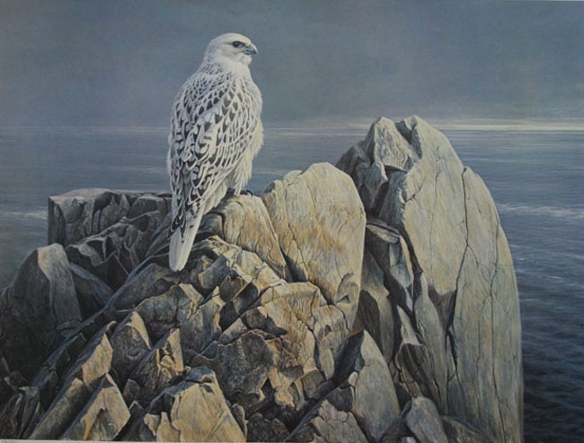 Robert Bateman Evening Light White Gyrfalcon