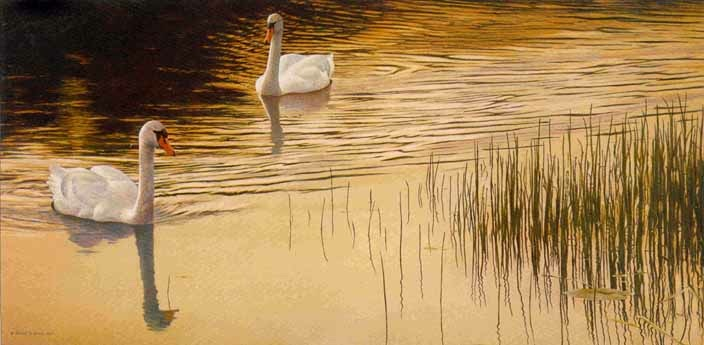 Robert Bateman Evening Idyll Mute Swans