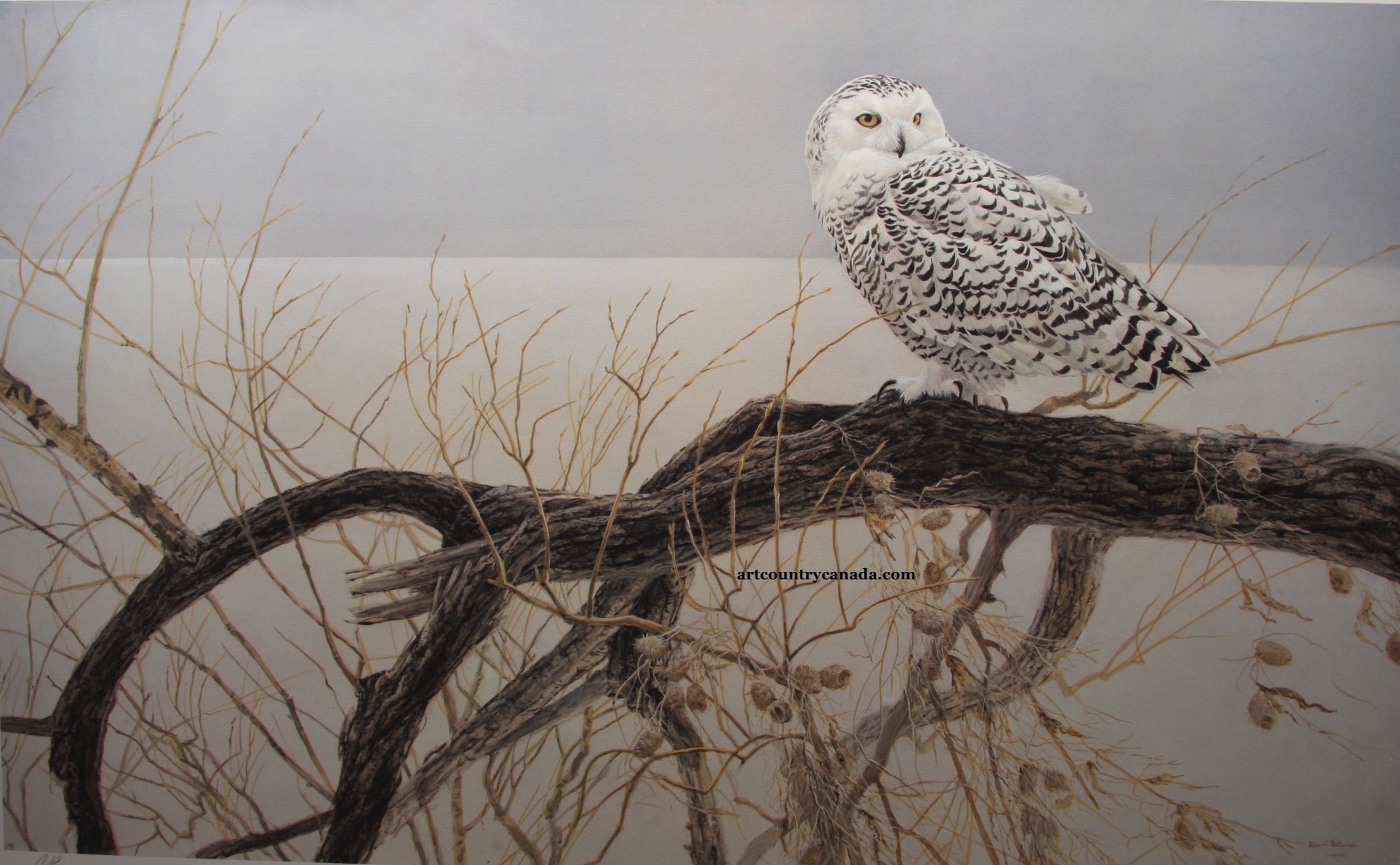 Robert Bateman Fallen Willow Snowy Owl