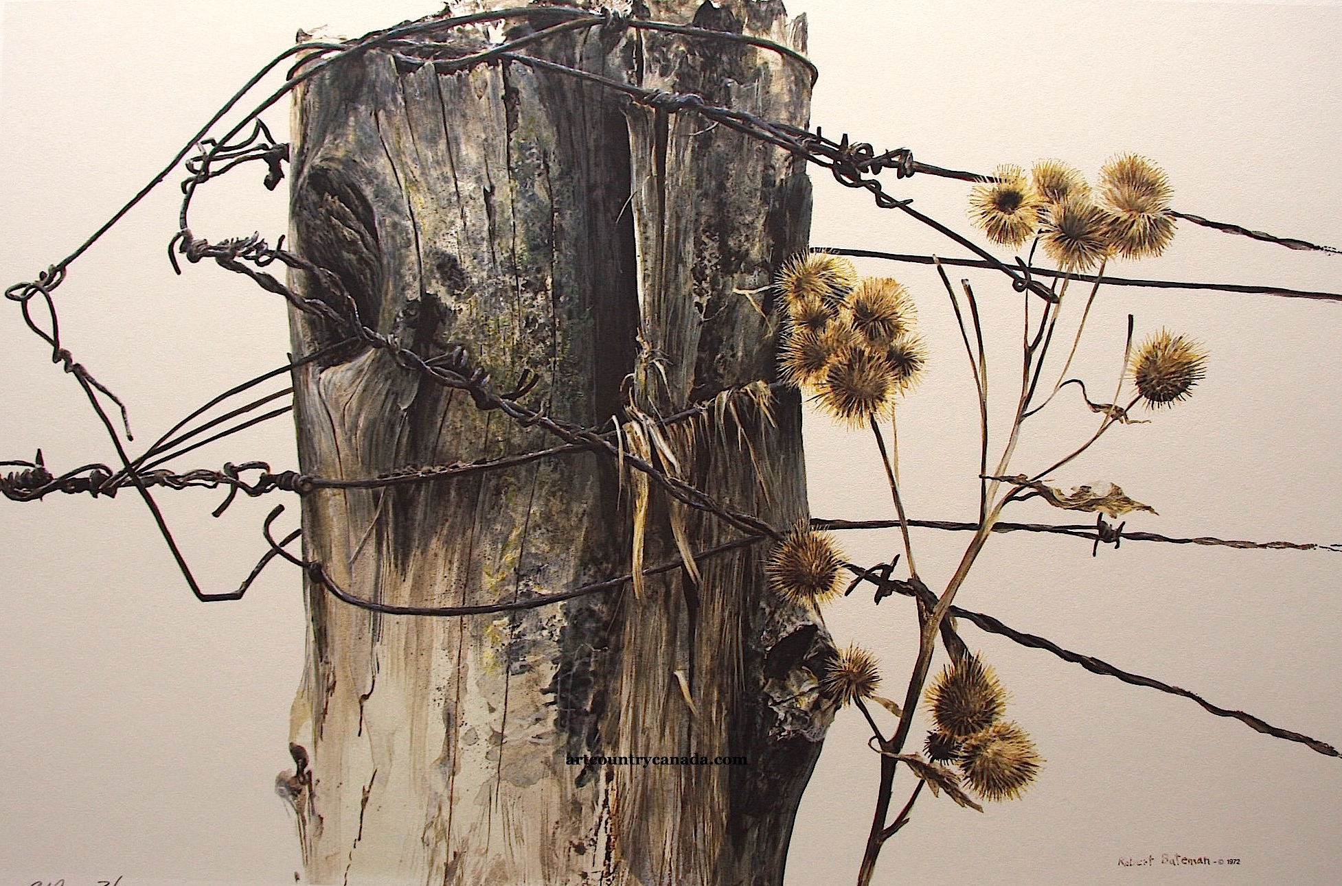 Robert Bateman fencepost and Burdock