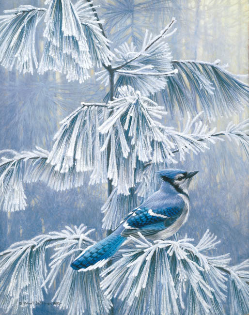 Robert Bateman Frosty Morning Blue Jay