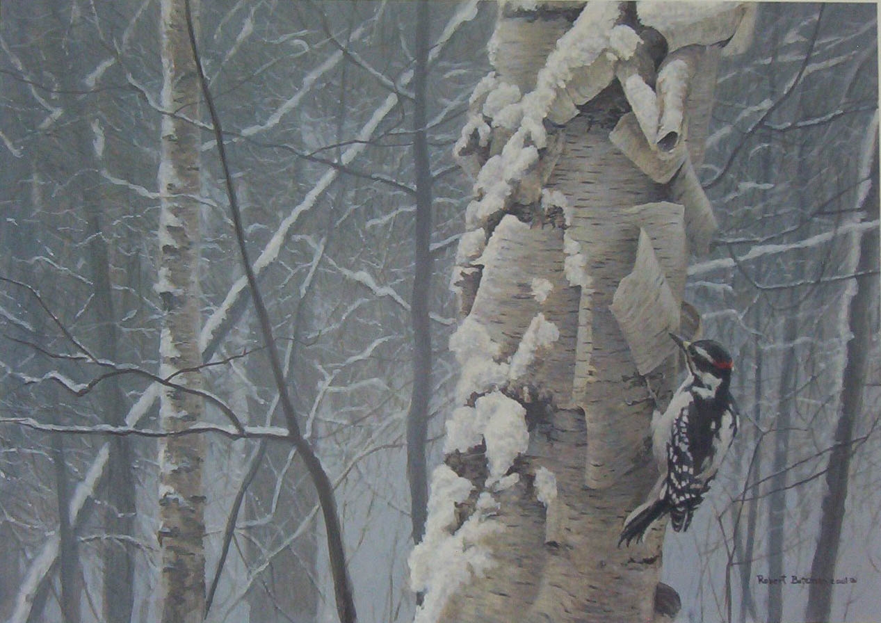 Robert Bateman Hairy Woodpecker On Birch