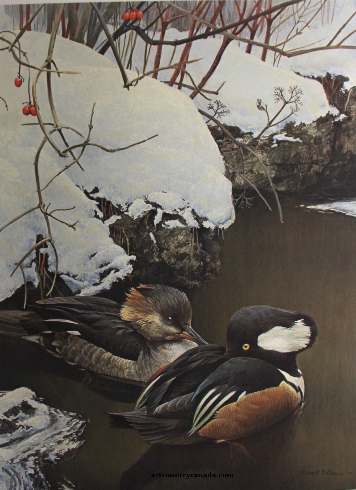 Robert Bateman Hooded Mergansers in Winter