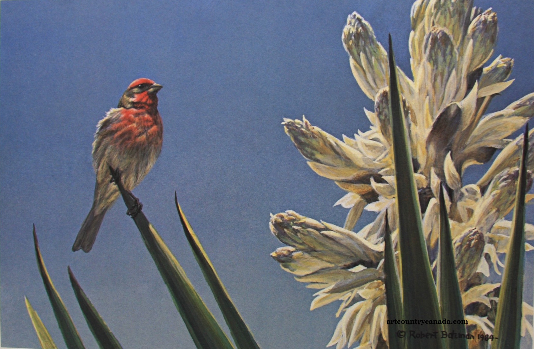 Robert Bateman House Finch And Yucca