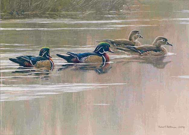 Robert Bateman Hurricane Lake Wood Ducks
