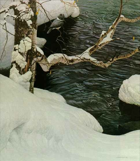 Robert bateman Kinfisher in winter