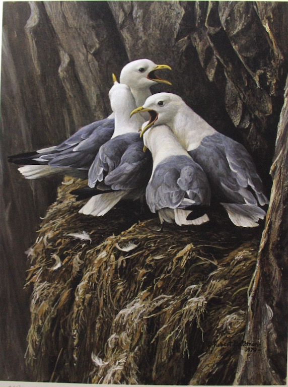 Robert Bateman Kittiwake Greeting