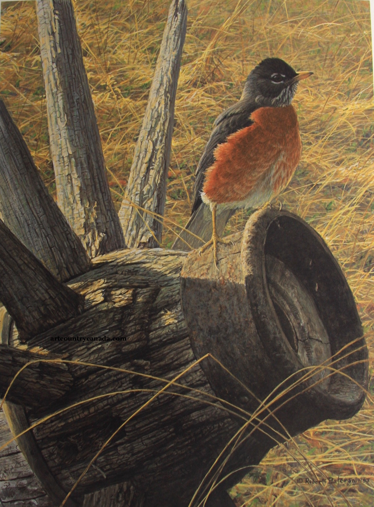 Robert Bateman New Season American Robin