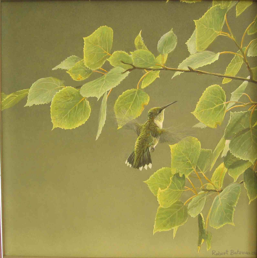 Robert Bateman Original Hummingbird