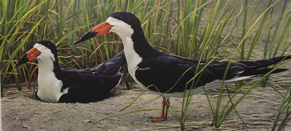 Robert bateman Pair Of Skimmers