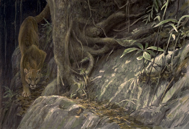 Robert Bateman Path Of The Panther