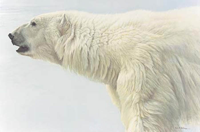 Robert Bateman Polar Bear Profile