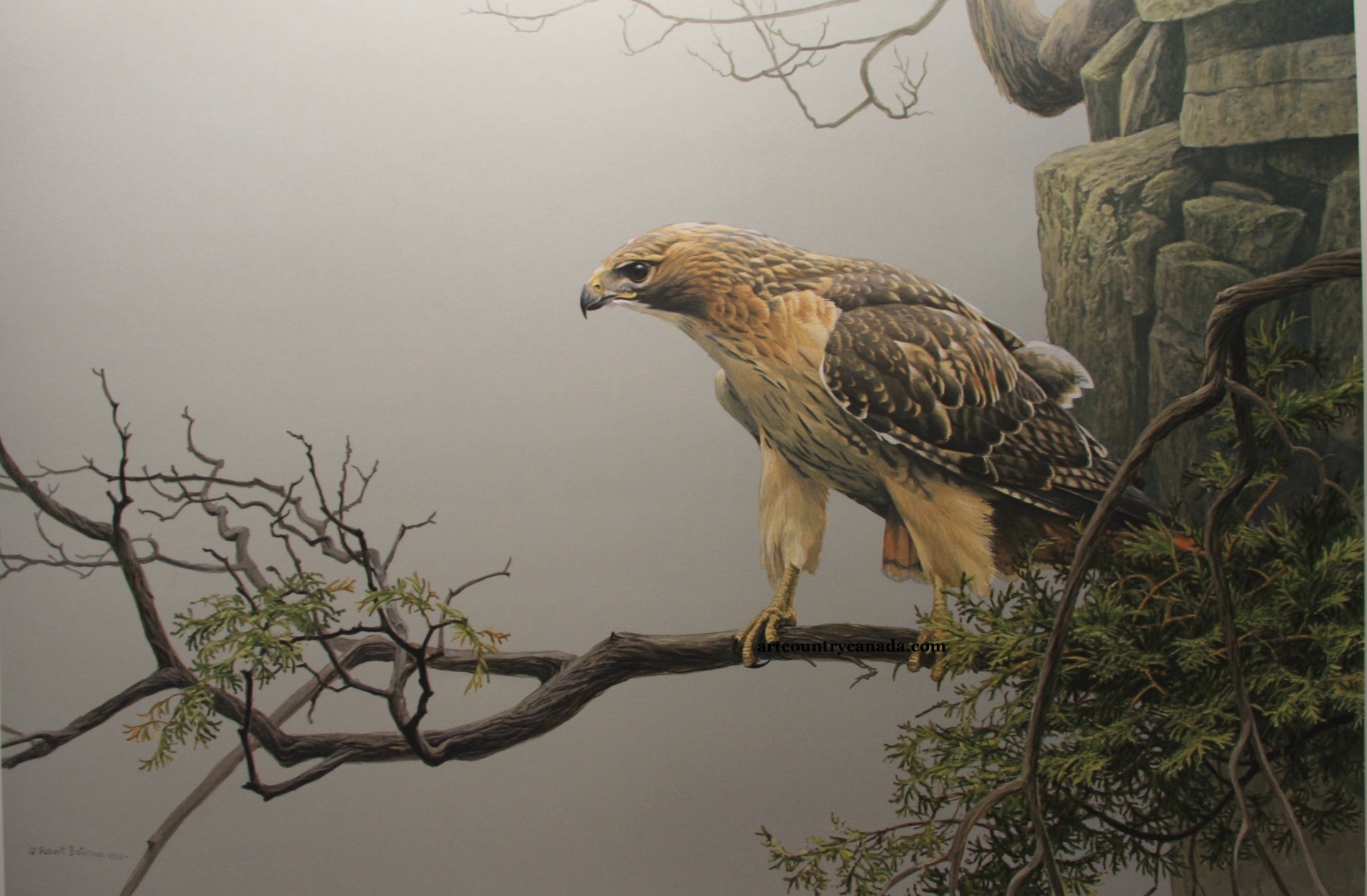 Robert Bateman Red-Tailed Hawk on The Cliff