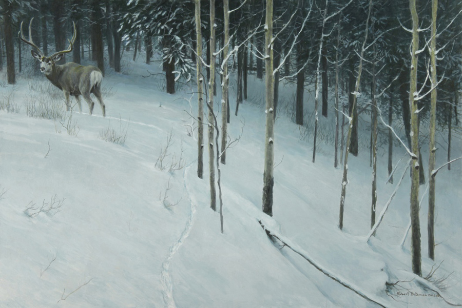 Robert Bateman Forest Trail Mule Deer